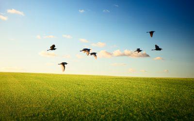 Kako ptice lete