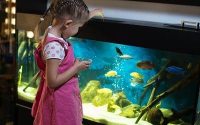 Kako ribe spavaju