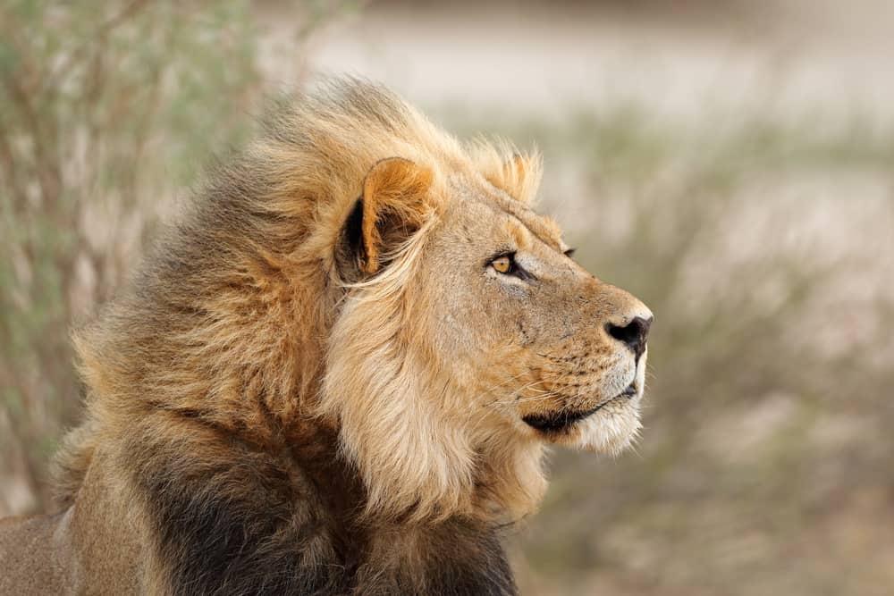 Najopasnije životinje na svijetu